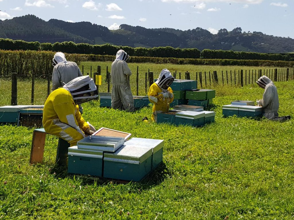 bee hives collecting honey