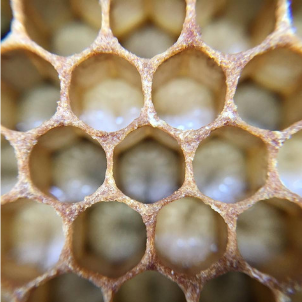 bee larvae are fed royal jelly