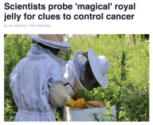 scientists study bees